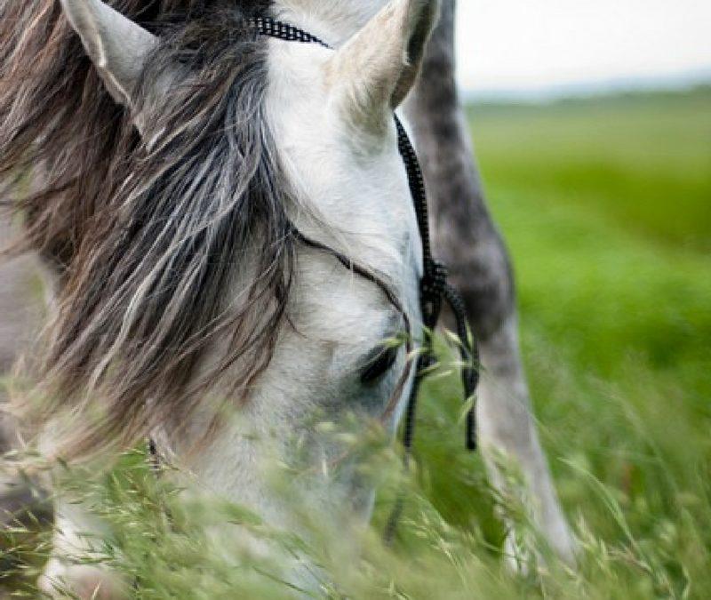 Paardencoaching, hoe werkt het?