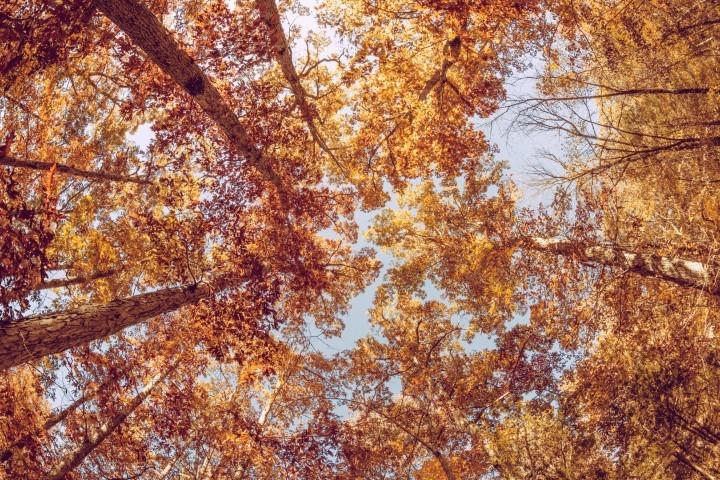 Herfst, laat maar waaien